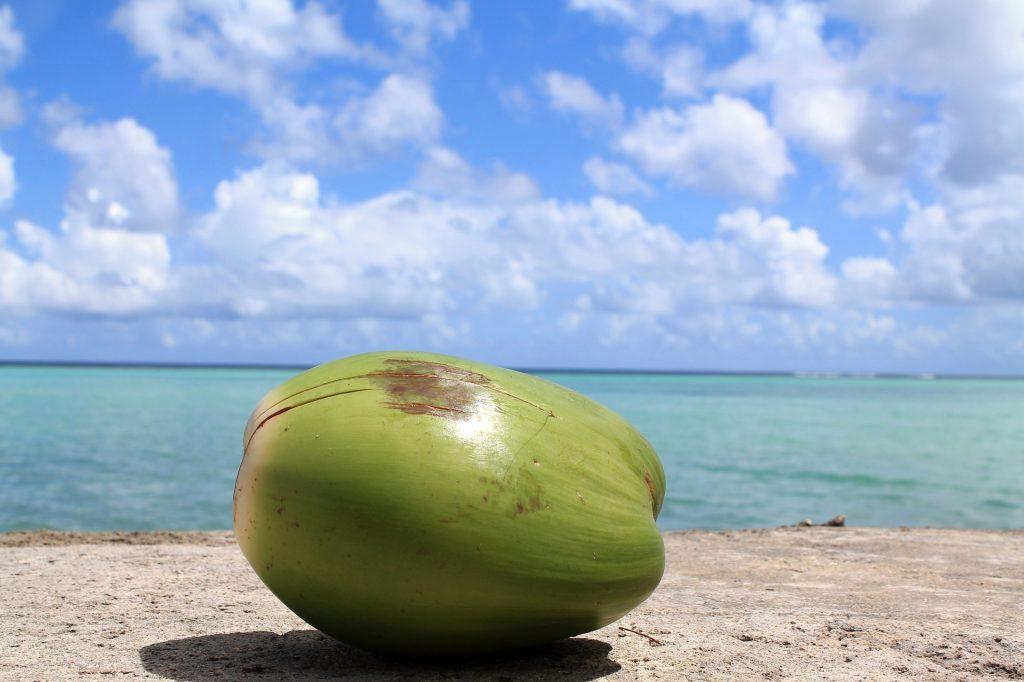 coconut-1179414_1920